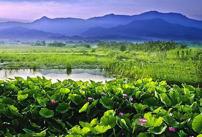白河「蓮の花」