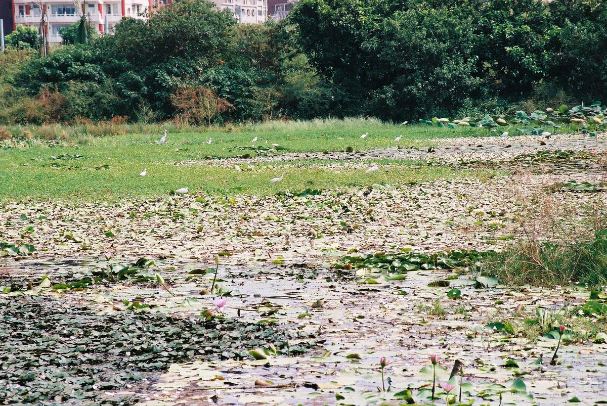 湿地の生態