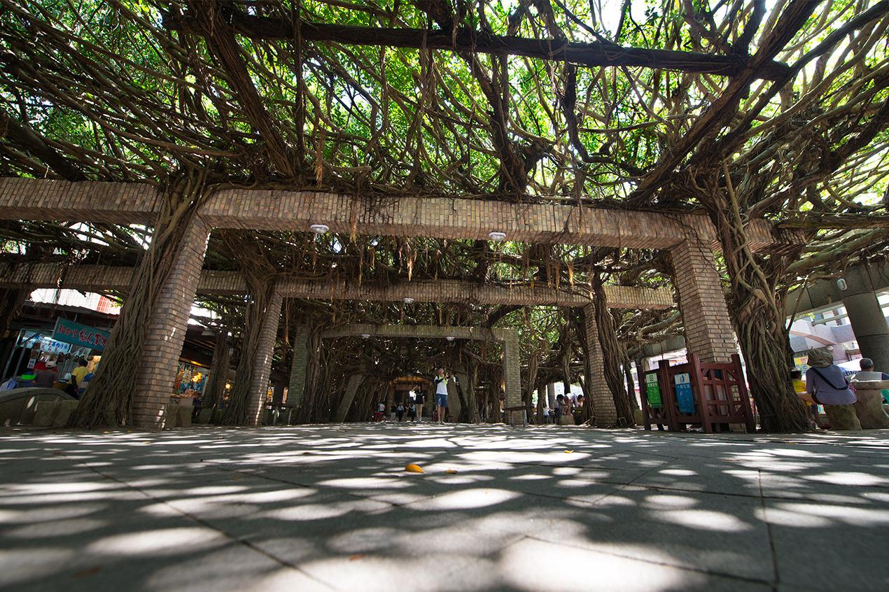 通樑大榕樹の休憩エリア