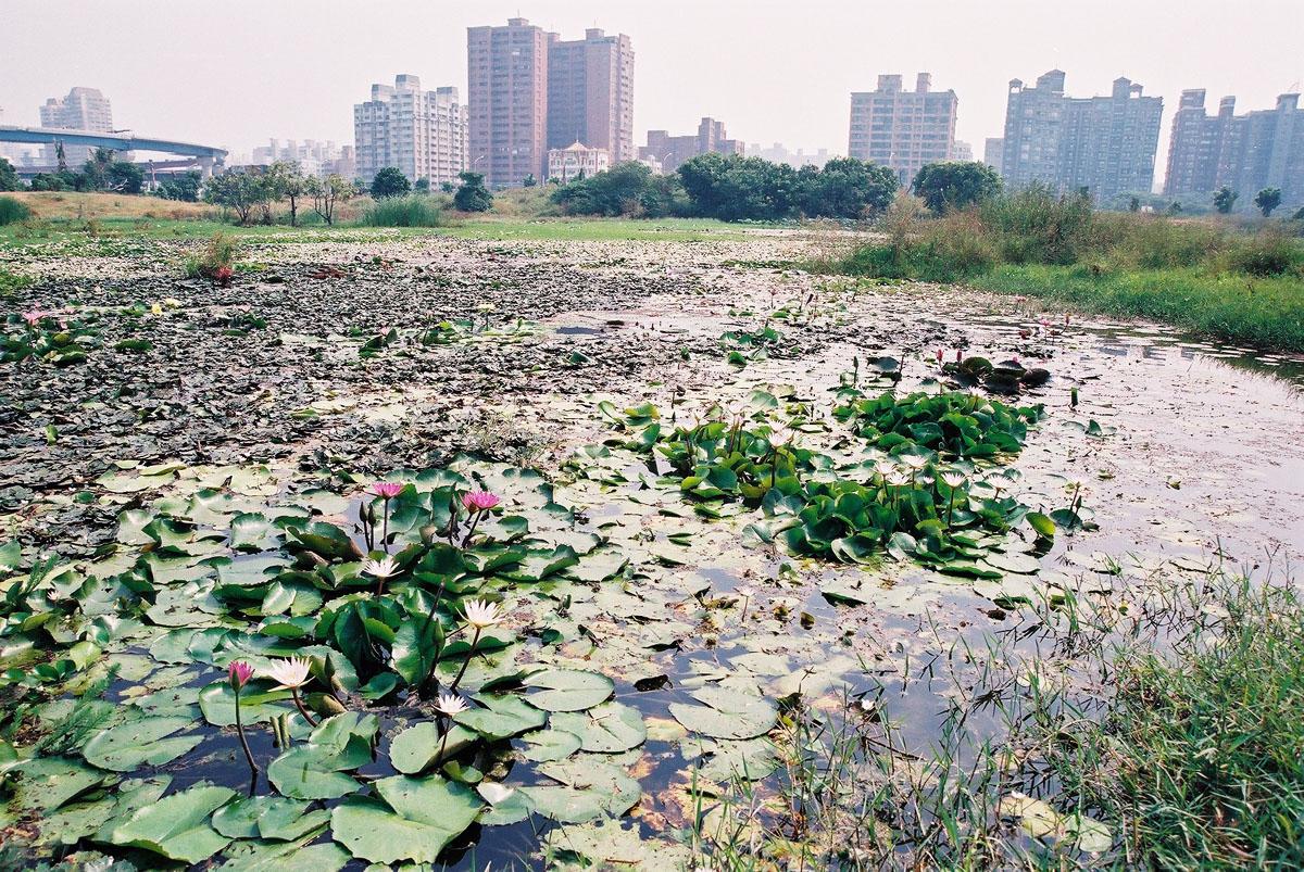 洲仔湿地公園