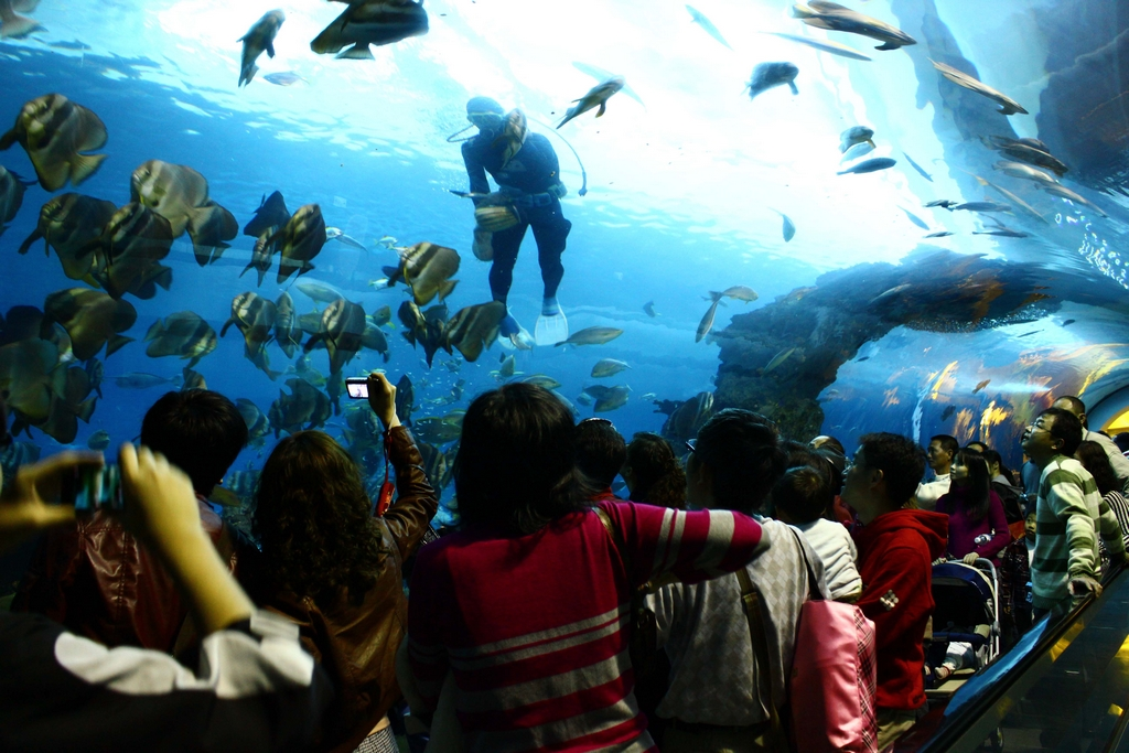 珊瑚王国館-海底隧道