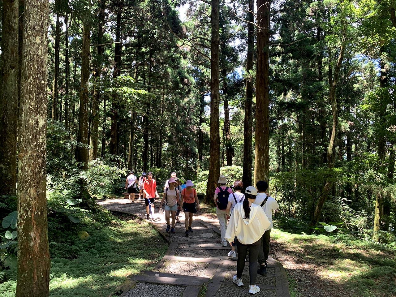 東眼山国家森林遊楽区步道