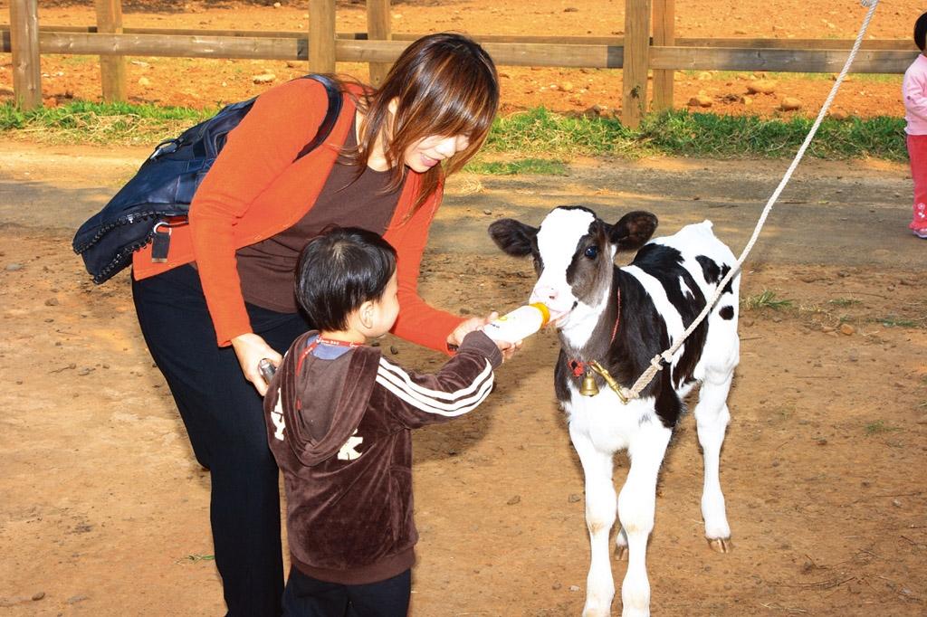 子牛に牛乳を食べさせる