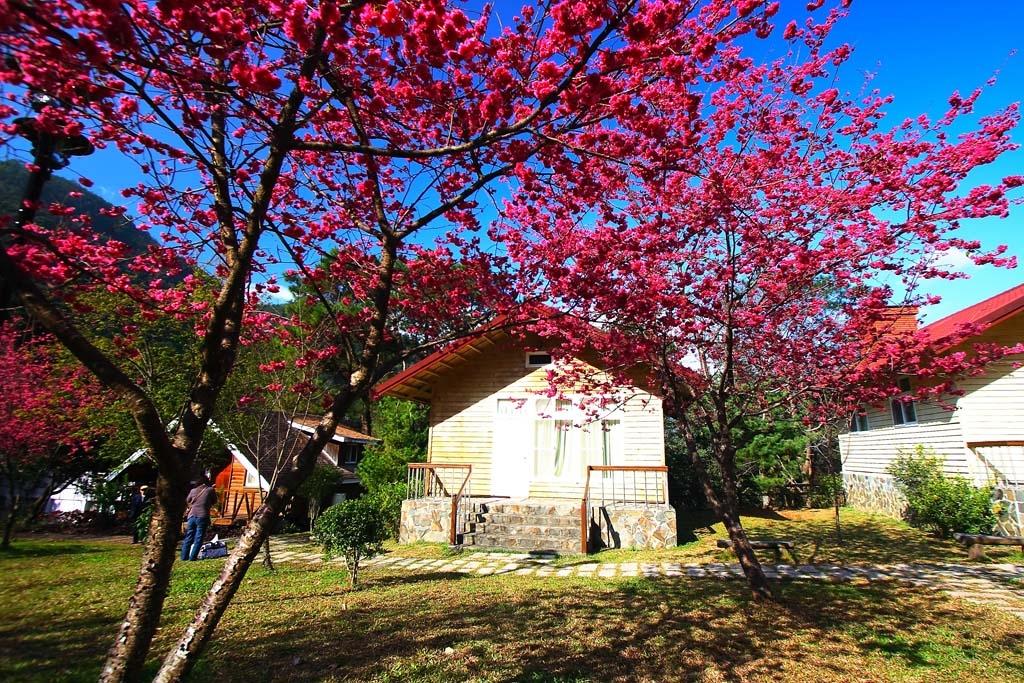 桜の花見のエリア