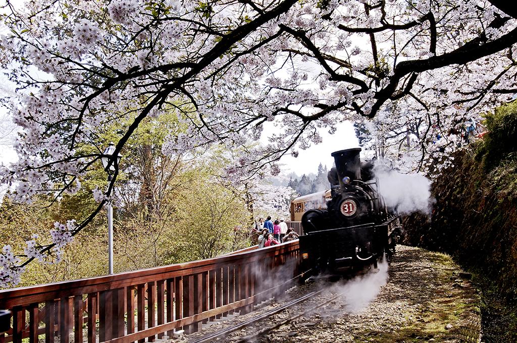 阿里山森林鉄道で桜の花見