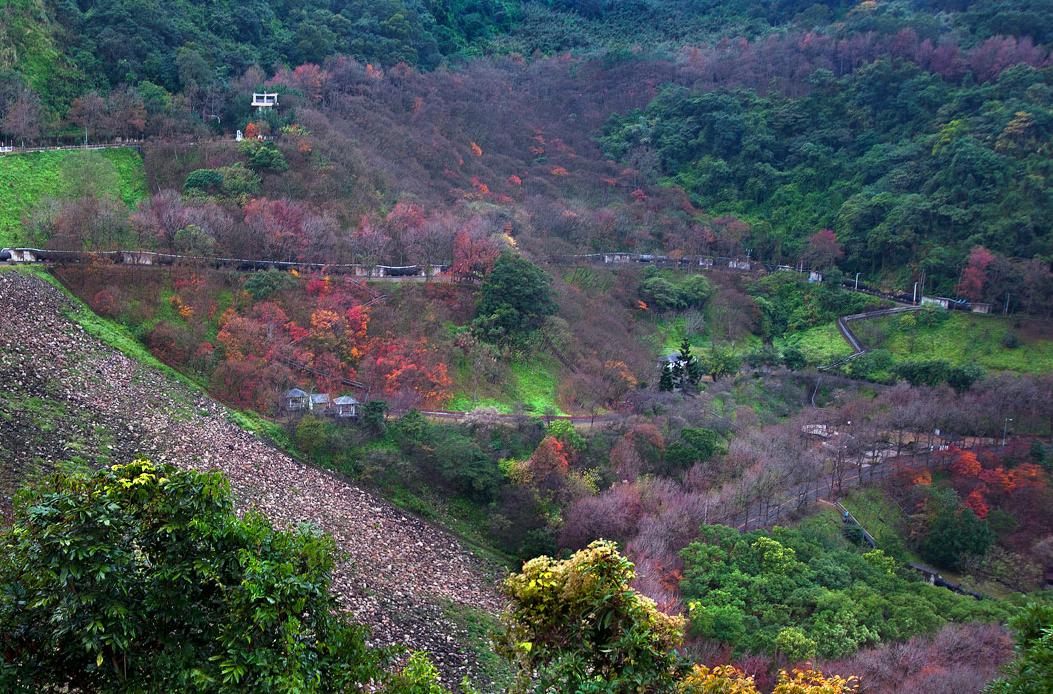 石門ダムの楓