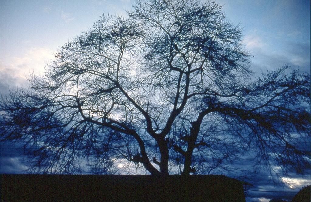 樹木の景色