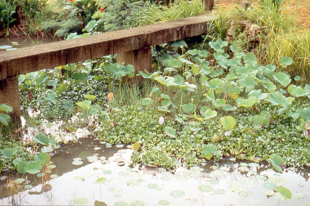 恒春生態農場の池