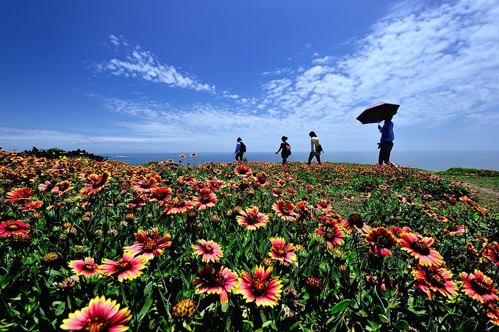 天台山のテンニンギク