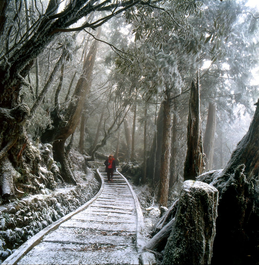 太平山国家森林遊楽区 雪の風景