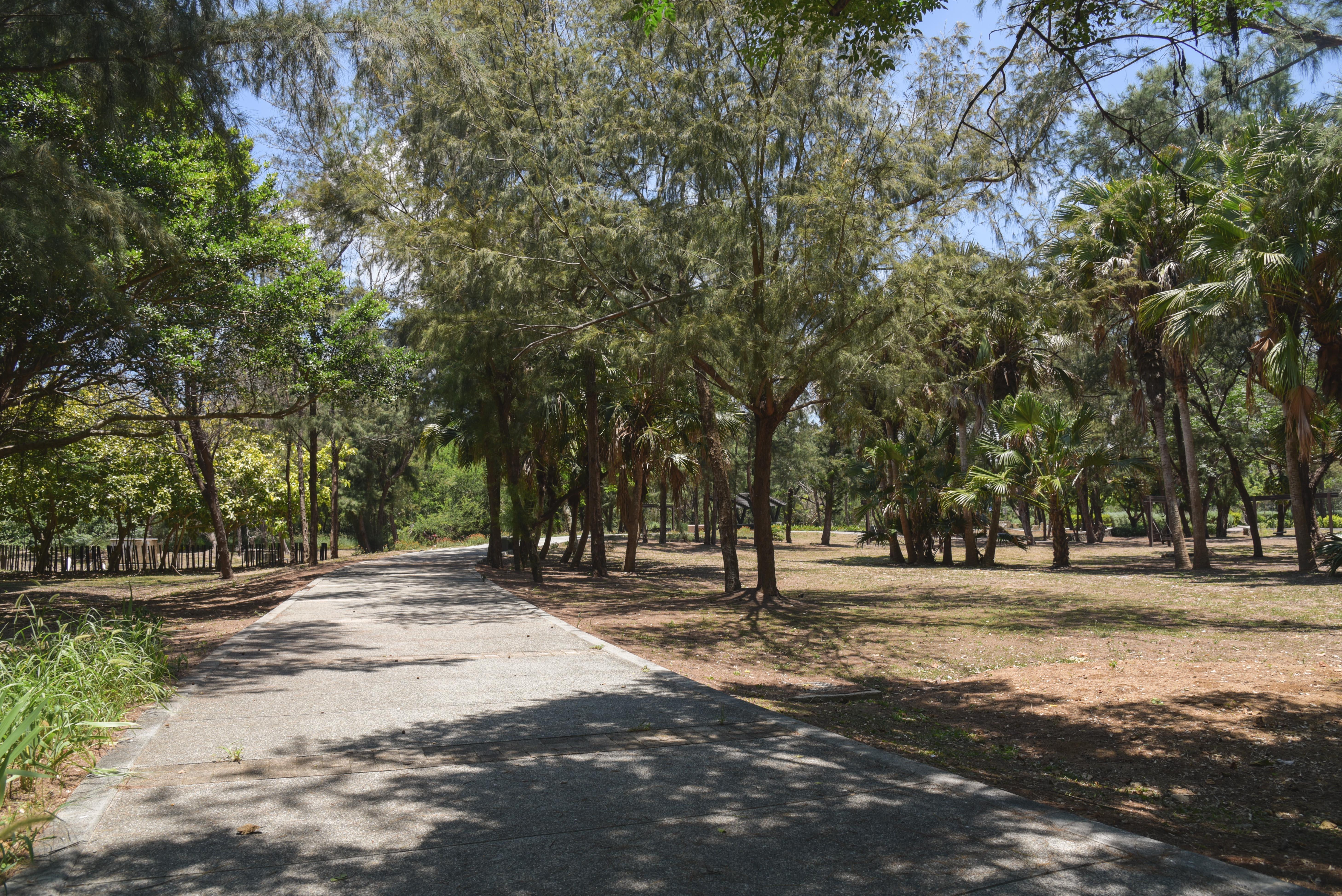 林投公園の遊歩道