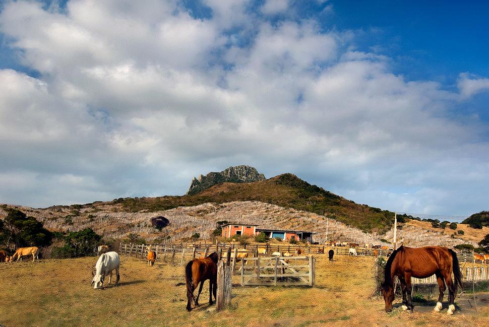 大尖山牧場