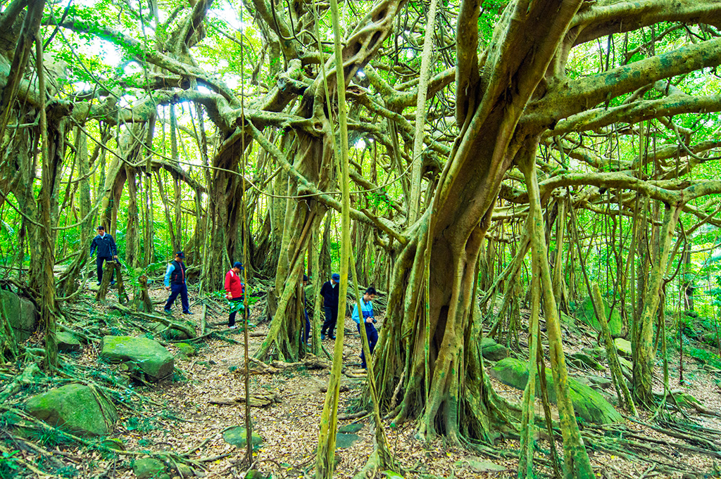 墾丁国家森林遊楽区