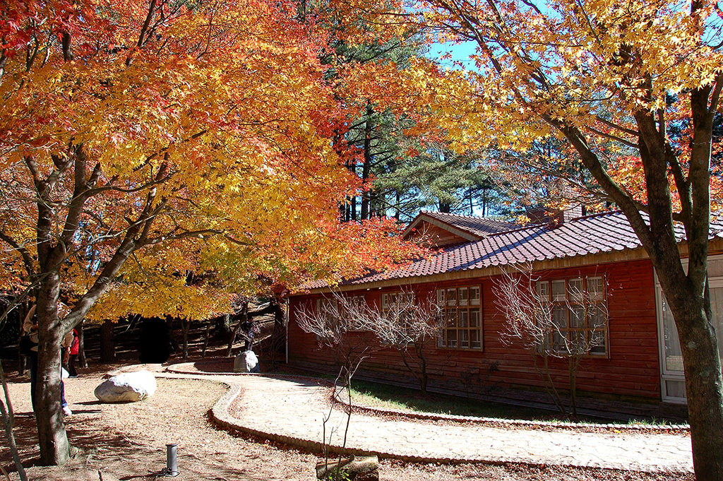 福寿山農場の楓