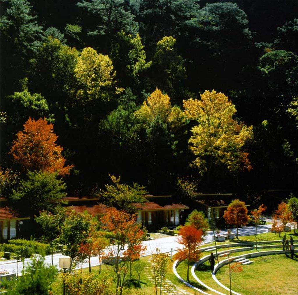 武陵農場の楓