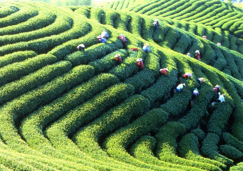 鹿谷郷農会茶業センター