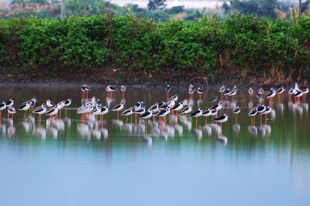 時潮水鳥保護エリア