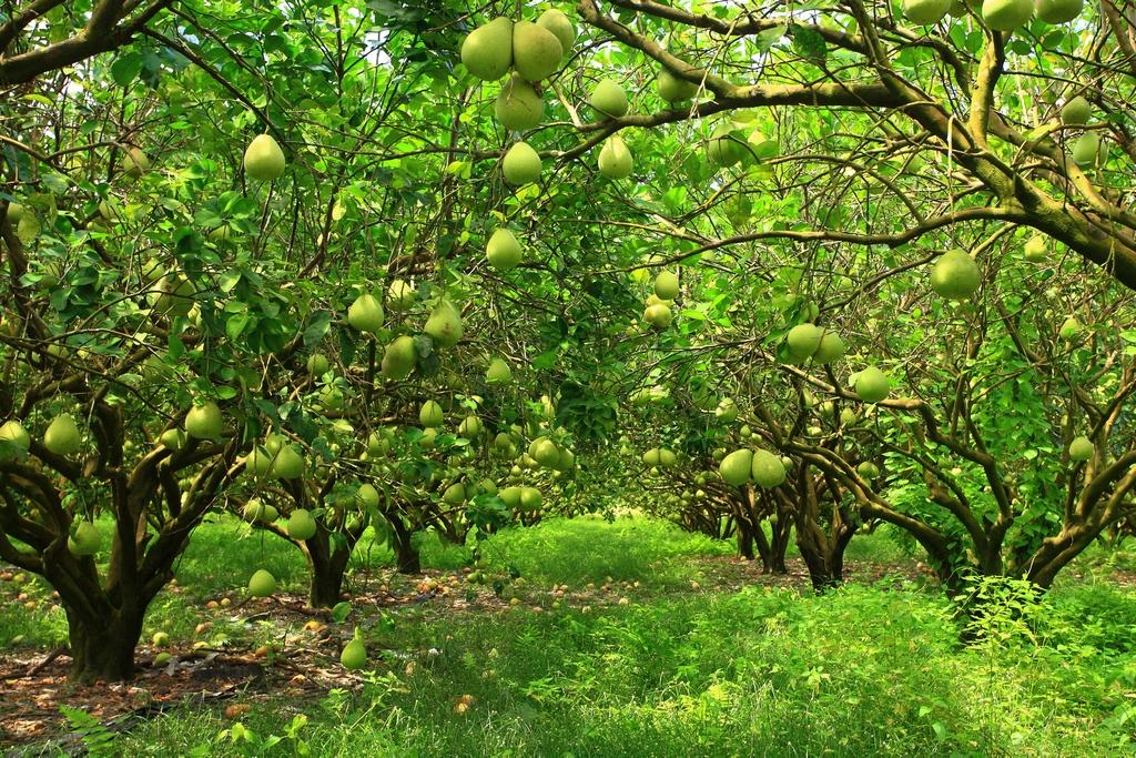 鶴岡観光柚子園