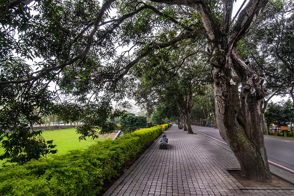 緑色トンネル景観公園の側にいる50年のマンゴツリー