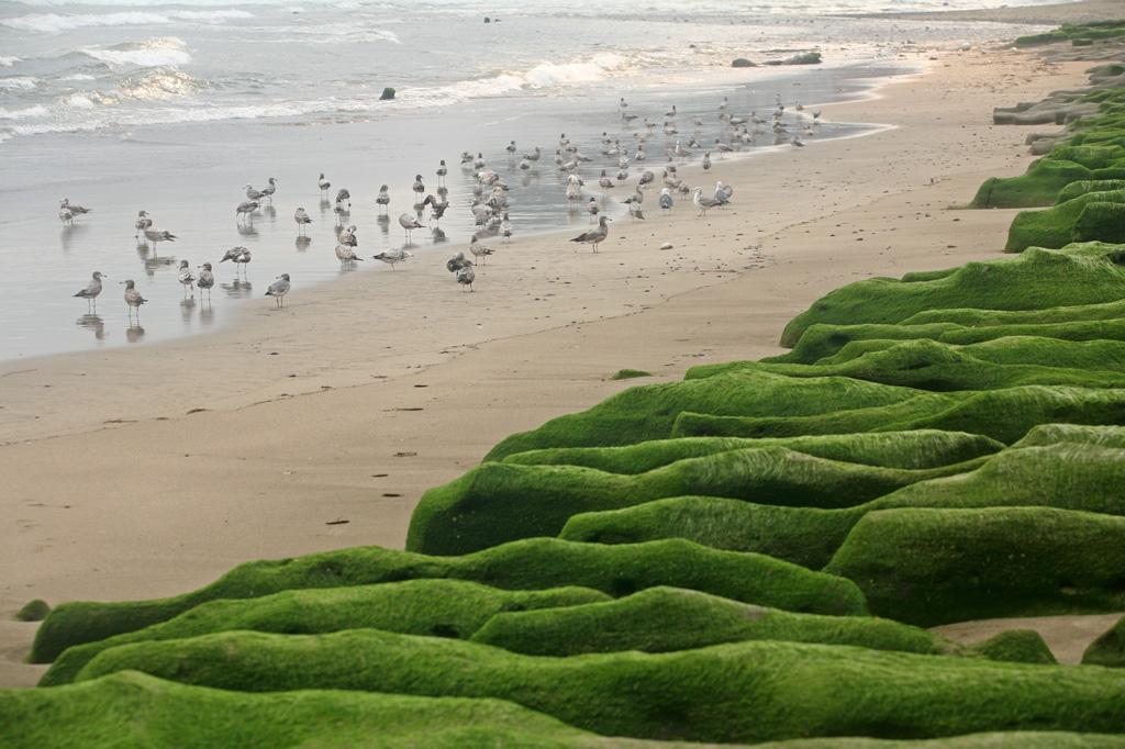 老梅緑石槽とカモメ
