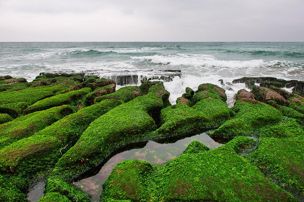 緑が生い茂った老梅緑石槽