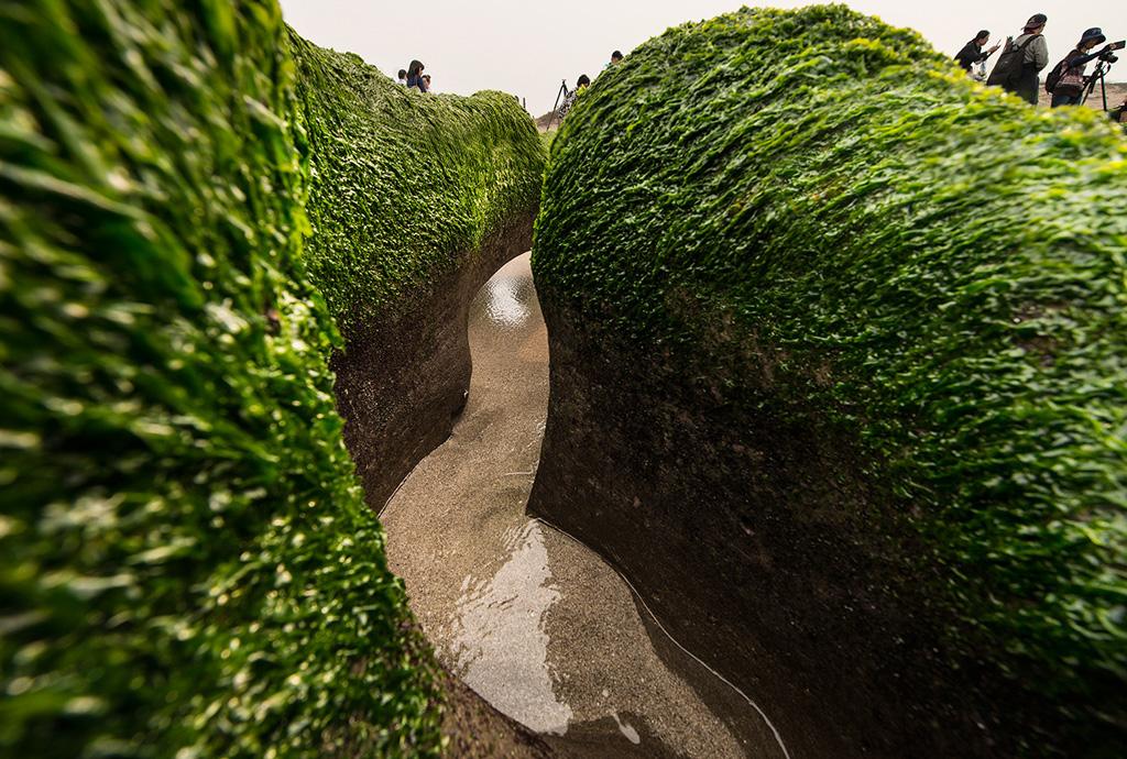 老梅緑石槽は緑色の海藻で一面が覆われます。