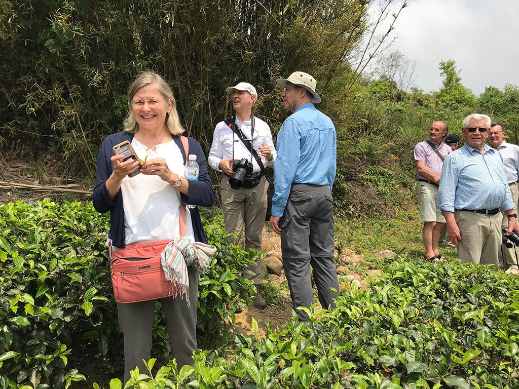 外国人観光客が茶園を見学する