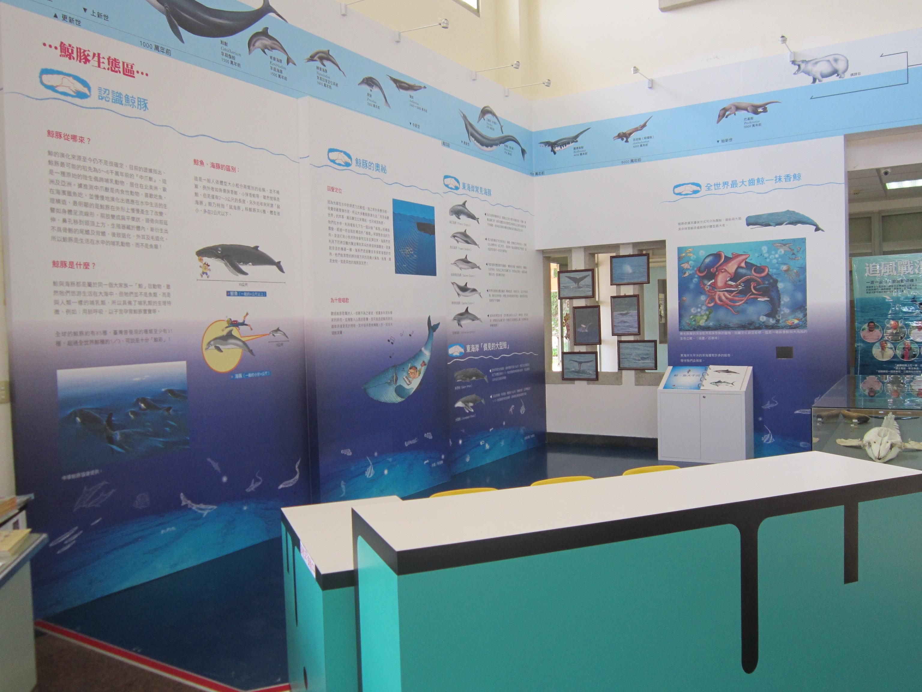 クジラ目生態区