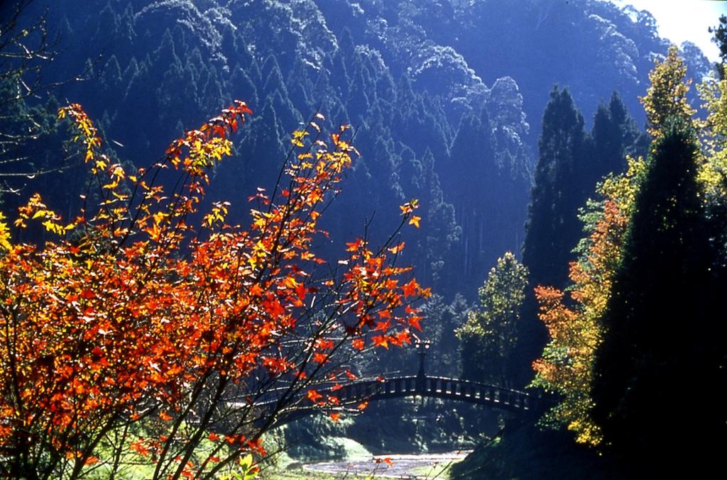 杉林渓森林生態レジャーランドの紅葉