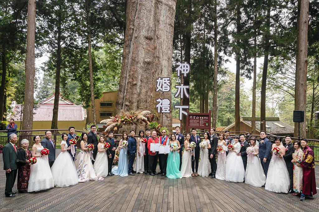 千年神木见证下浪漫婚礼