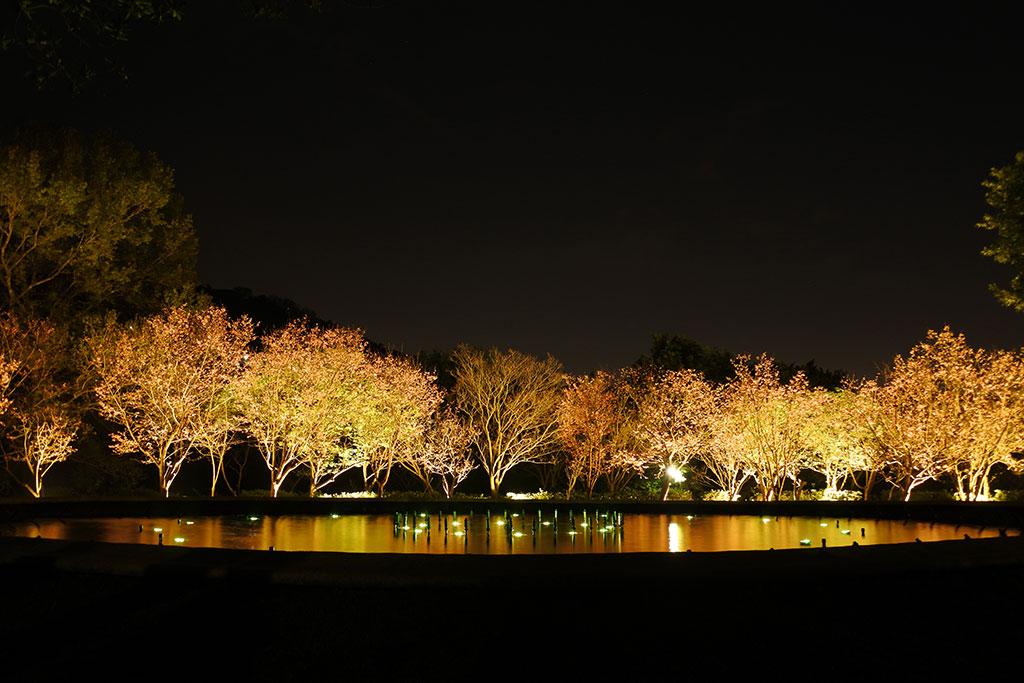 阳明公园喷水池夜景