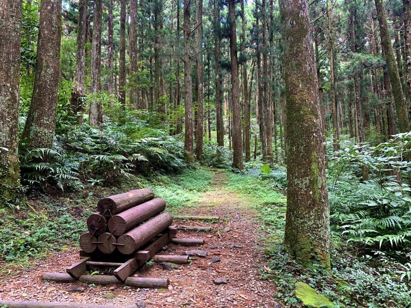 東眼山国家森林遊楽区