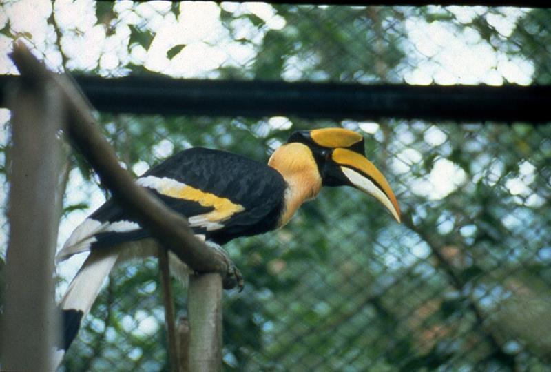 鳳凰谷鳥園生態園区