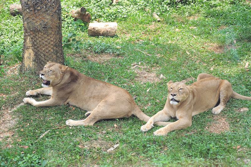 寿山動物園