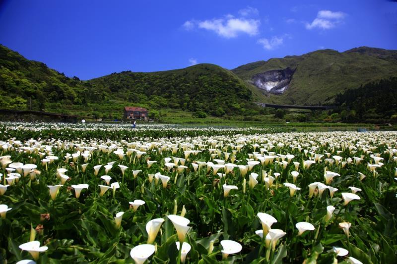 陽明山国家公園