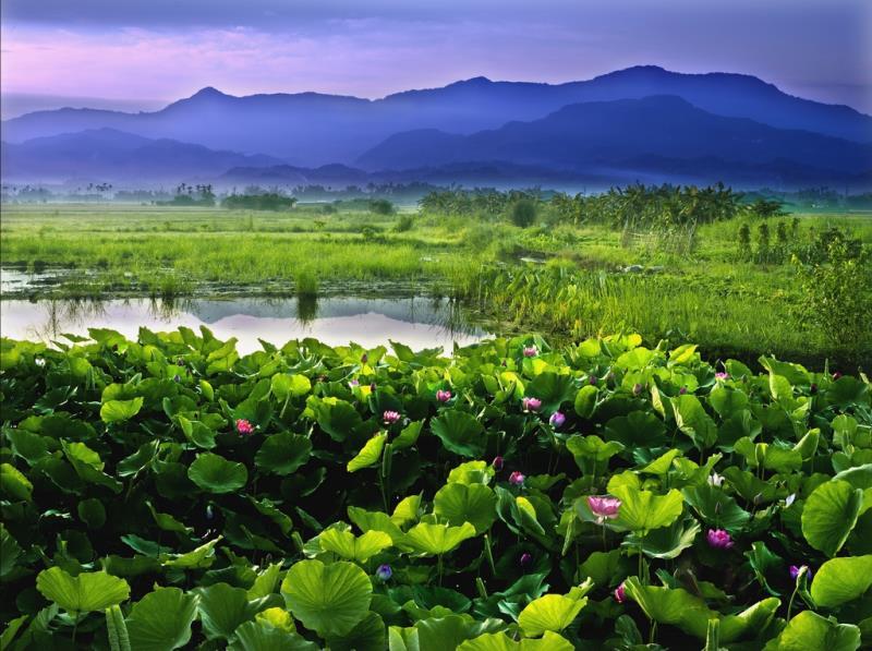 台南の白河関子嶺-お花見と温泉の旅1日間ツアー
