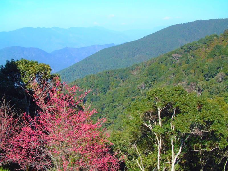 藤枝国家森林遊楽区
