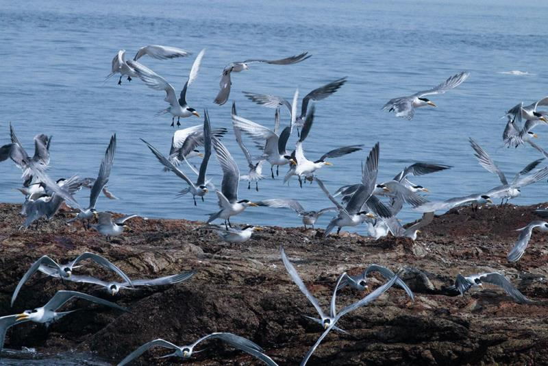 馬祖島クルージング  年度:2019  写真提供:連江県交通旅遊局
