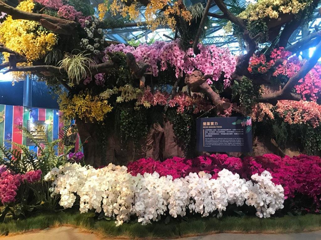 台湾国際蘭展  年度:2019  写真提供:臺南市政府農業局