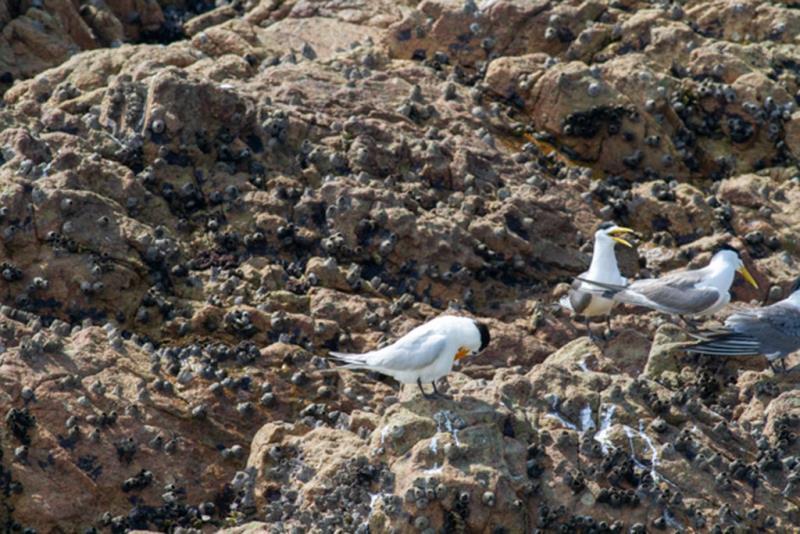 神話の鳥 毛づくろい  年度:2018  写真提供:交通部観光局馬祖国家風景区管理処