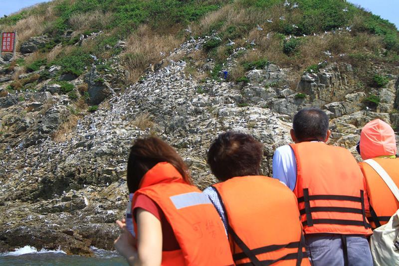 アジサシの生態観察-馬祖島クルージング  年度:2019  写真提供:連江県交通旅遊局